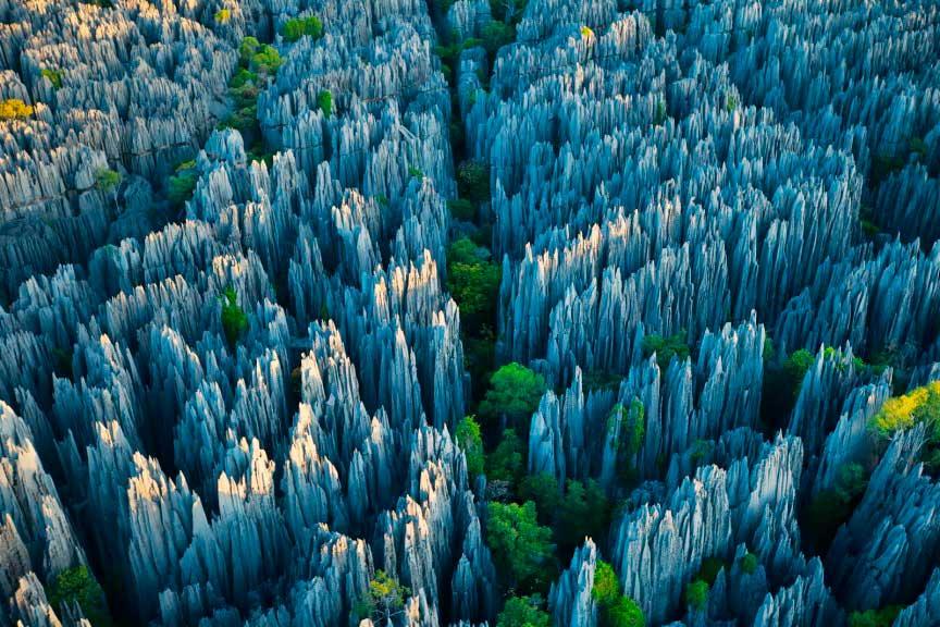 Лес ножей, Мадагаскара