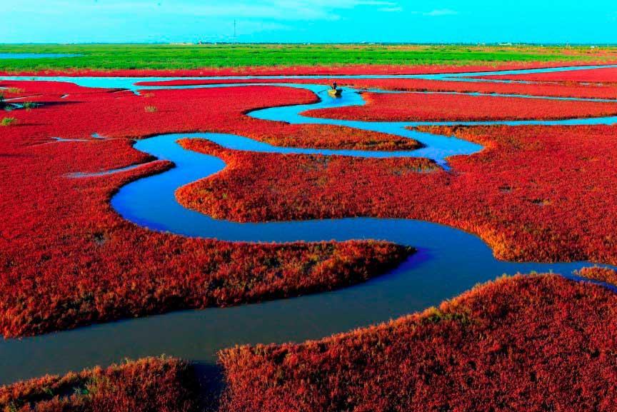 Красный пляж, Панцзин, Китай