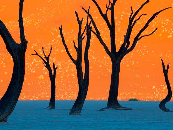 Деревья верблюжьей акации – Национальный парк Намиб-Науклуфт, Намибия
