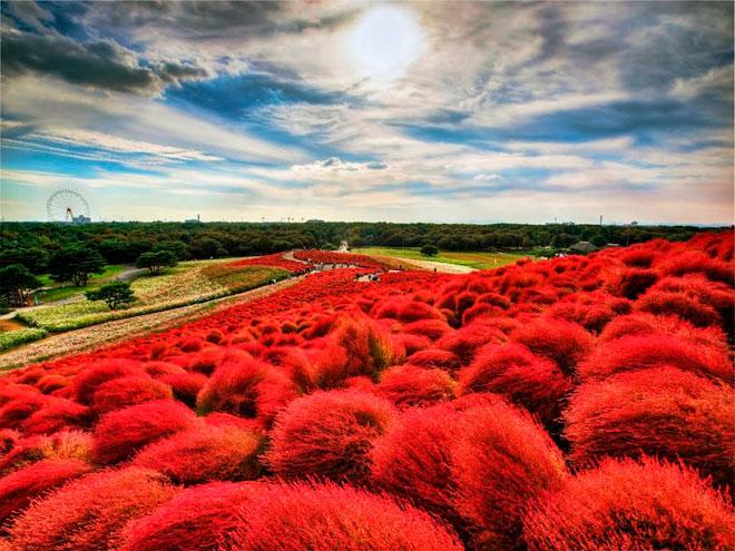 Прибрежный Парк Хитачи – Хитатинака, Япония