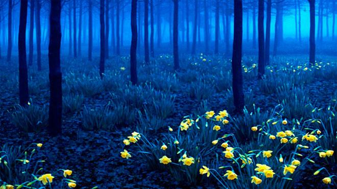 Шварцвальд (Black Forest) – Юго-Западная Германия