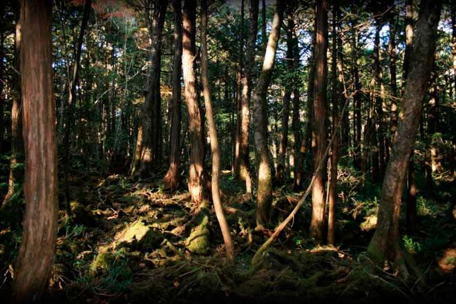 Лес Aokigahara, Япония