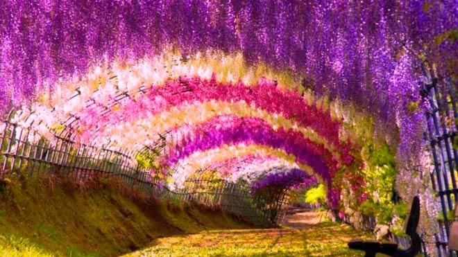 Цветочный Тоннель Глицини – Китакюсю, Япония