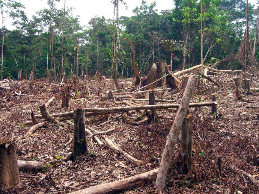 an introduction to the issue of rain forest destruction and the earth