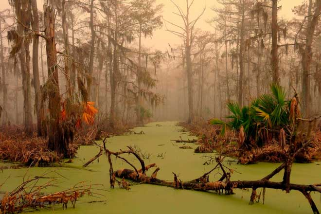 Болото Manchac, Луизиана