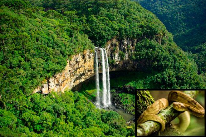Поход через остров змеи, Бразилия