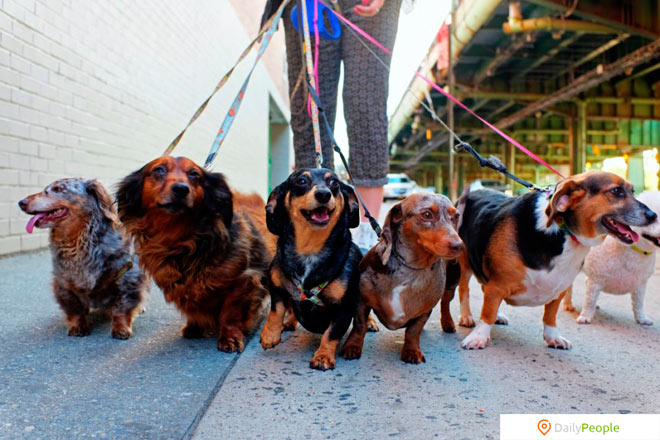 Работа по выгулу собак