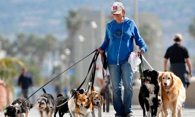 Выгуливатель собак