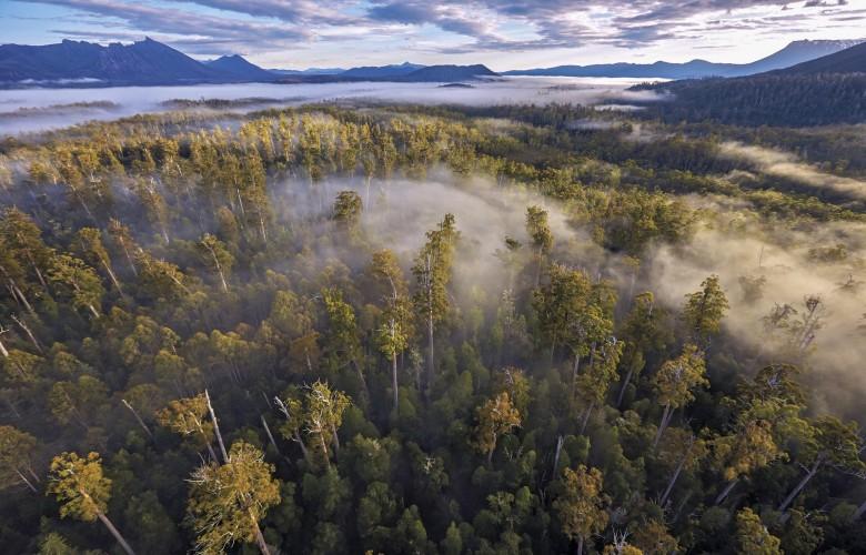 Тасманийские леса