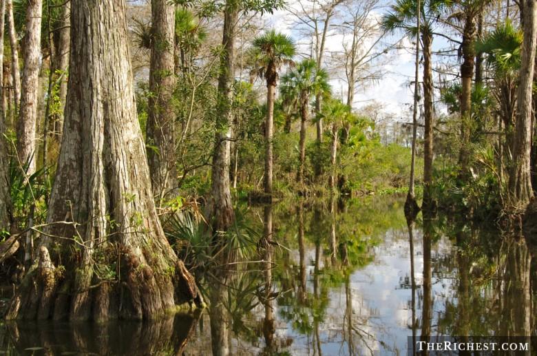 Флоридские болотистые равнины