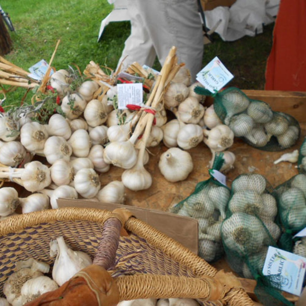 Garlic & Harvest Festival