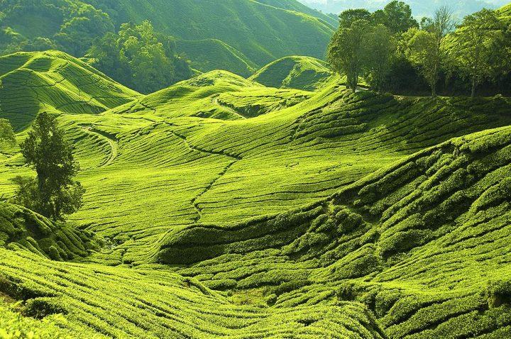 Топ-8 достопримечательностей Малайзии