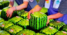 Топ-10 самых дорогих продуктов Японии